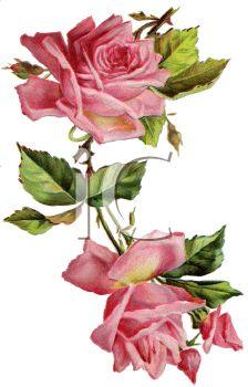 vintage roses png - Поиск в Google
