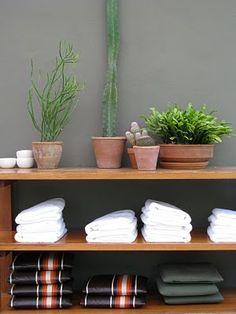 hotel san jose // plants