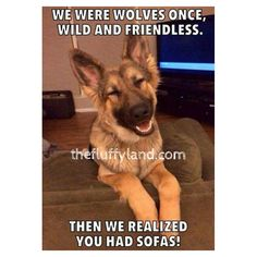 Wicked Training Your German Shepherd Dog Ideas. Mind Blowing Training Your German Shepherd Dog Ideas. Animals And Pets, Baby Animals, Funny Animals, Cute Animals, Cute Puppies, Dogs And Puppies, Cute Dogs, Doggies, Terrier Puppies