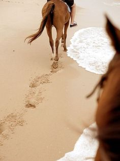 Pretty Horses, Horse Love, Horse Girl, Beautiful Horses, Beach Rides, Horse Pictures, Equine Photography, Horse Riding, Riding Boots