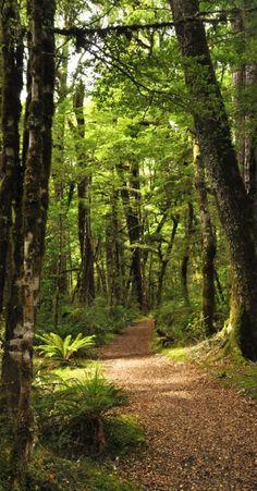 Lake Gunn Nature Walk, South Island, - NZ