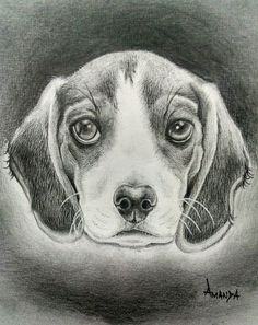 #dog #cachorro #draw #realism #blackandgrey #tattoo #desenho #drawing #amandalucateli