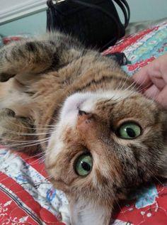 My Lovely Kitty Chloe by krissy0023 cats kitten catsonweb cute adorable funny sleepy animals nature kitty cutie ca