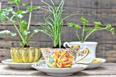 Herb garden in tea cups! I love tea cups but cannot stand having empty useless cups around.this is perfect! Diy Herb Garden, Garden Pots, Garden Ideas, Herbs Garden, Upcycled Garden, Garden Fun, Herb Planters, Planter Pots, Herb Pots