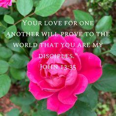 Scriptures, Bible Verses, World, Rose, Illustration, Flowers, Plants, The World, Illustrations