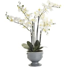 Pier 1 Imports White Faux Phalaenopsis Orchid Arrangement (77 CAD) ❤ liked on Polyvore featuring home, home decor, floral decor, white orchid arrangement, outdoor flower pots, artificial orchid arrangement, artificial arrangement and outdoor pots
