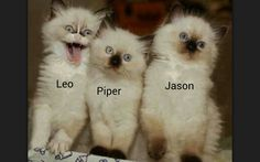 Heroes of Olympus as kittens.