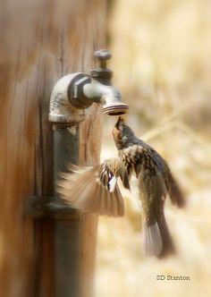 Thirsty.
