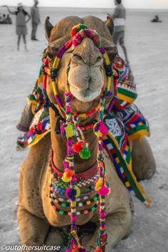 Visiting the Salt Desert, Rann of Kutch, India. #Wanderlust #Travel #Photography #Colourful #India