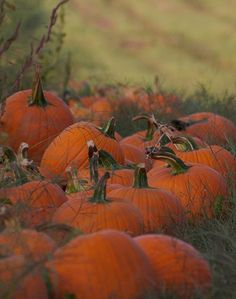 coffee-and-wood:  pumpkin patch