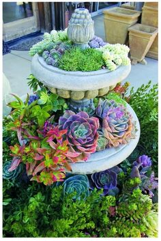 beautiful succulents and I have a bird bath like this!