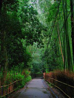 Бамбуковая роща Сагано в Киото. Япония.