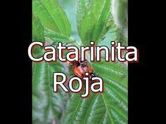 La Catarinita Roja