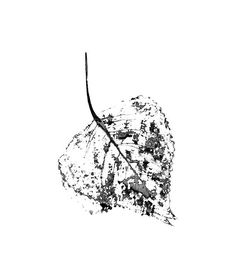 Abstract leaf printable  greyscale  print up to