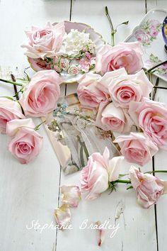 розы шебби шик