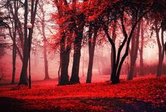 autumn, ember, fire, forest, pretty - inspiring picture on Favim.com