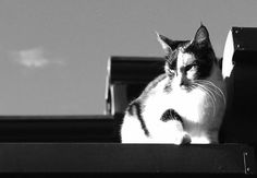 A cat in the roof.
