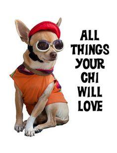 Chihuahuas!!!