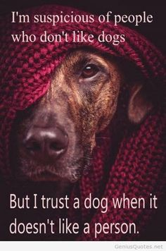 Trust a dog who doesn't like someone! So DogGone Funny!