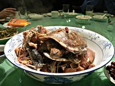 Turtle and Snake Stew | 14 Unusual Foods That Are Only For The Brave Of Heart