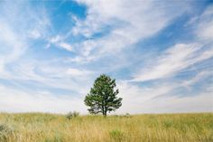 grass field tree -  grass field tree free stock photo Dimensions:2509 x 1673 Size:1.21 MB  - http://www.welovesolo.com/grass-field-tree/