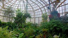 アメリカシカゴの リンカーン パーク植物園 。ガラス張りの温室に珍しい植物が生い茂り、静かな昼下がりを満喫するにはぴったりの場所です。