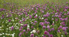 Prosjekt for bedre stell av jord og planter Purple Perennials, Planters, Flowers, Nature, Naturaleza, Plant, Window Boxes, Royal Icing Flowers, Nature Illustration