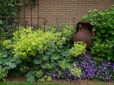 Lady's Mantle and Campanula