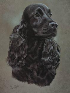 Un retrato de perro negro Cocker Spaniel hermoso pintado por Brian Hupfield Esto es como una letra grande (tamaño estándar 15,75 x 11,75 (395 x 295 mm) Gastos de envío gratis en el Reino Unido Sobre la raza Originalmente (y a veces todavía) criado como un perro (un perro de caza) de Perro Cocker Spaniel, Black Cocker Spaniel, English Cocker Spaniel, Spaniel Puppies, Wow Art, Animal Sketches, Hunting Dogs, Dog Portraits, Little Dogs