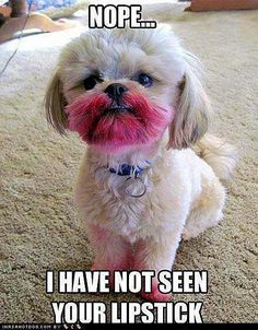 Lipstick? I have no idea what you're talking about!