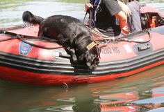 Sniffing out the scent: Search and rescue dogs train in N.J. lake ...
