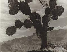 Anton Bruehl: On the road to Toluca, 1932