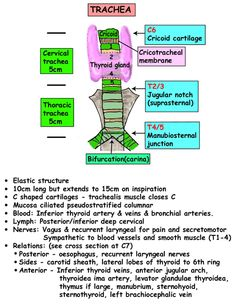 Instant Anatomy - Head and Neck - Areas/Organs - Trachea
