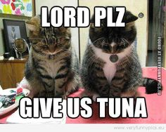praying for tuna http://sulia.com/channel/cats/f/1eacee6d-927b-447f-abb5-523db18d5705/?source=pin&action=share&btn=small&form_factor=desktop