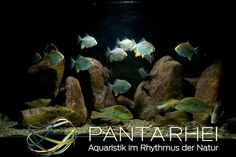 https://www.facebook.com/panta.rhei.50