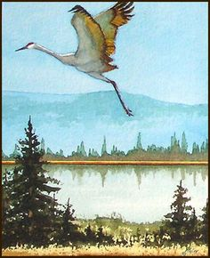 watercolor crane   Watercolor painting of sandhill cranes, triptych 1, by John P. Finley
