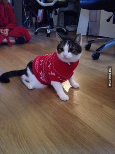 Jumper cat!