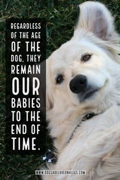 Dog Quote - Regardless of the age of the dog... Dog | Dog Quotes | Inspirational Quotes | Funny Quotes | Life Quotes