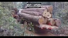 Caminhões: e maquinas a destruição da floresta amazônica