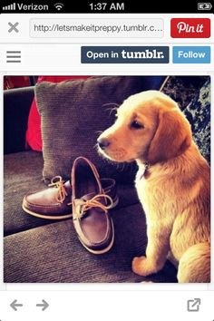 Sperrys and golden