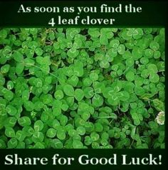 lol i dont think thats a legit 4 leaf clover. i think its a widespread 3 leaf with a leaf under it from another clover Optical Illusions, Brain Illusions, Pusheen, Mind Blown, Just In Case, I Laughed, Fun Facts, Funny Pictures, Funny Quotes