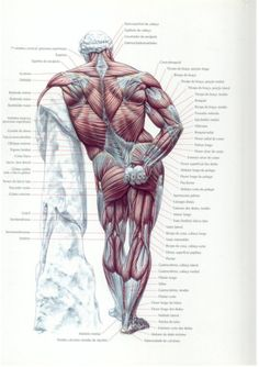 Guia dos movimentos de musculação, abordagem anatômica (português, il…