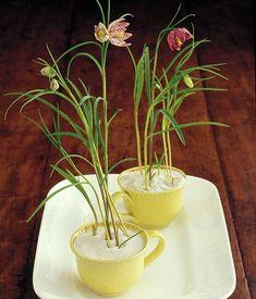 Als Arrangement, Sträuße oder im Topf - wir haben Narzissen, Schachbrettblume, Vergissmeinnicht und Glockenblumen kunstvoll dekoriert.
