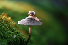 Unique - Snails and Insects Closeup by Vadim Trunov