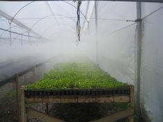 TECNOLOGÍA AGRÍCOLA: ¿QUÉ ES EL RIEGO POR NEBULIZACIÓN? El #Riego por #Nebulización es un sistema que tiene la capacidad de aportar las cantidades adecuadas de agua y/o fertilizantes que necesitan las plantas, todo esto a través de una capa de finas gotas en forma de neblina; su función principal es absorber el calor y nivelar la temperatura del ambiente... Lee más dando click en la imagen.