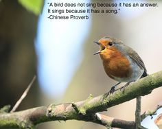"""""""A bird does not sing because it has an answer. It sings because it has a song."""""""
