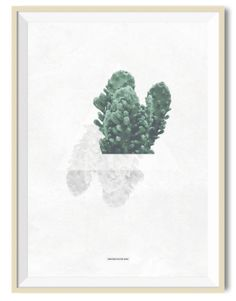 Cactus 02 - A3 poster - Another Poster Shop