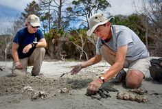 First time South Carolina sea turtle worker seeks rewards but toils against predators | News | postandcourier.com