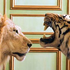 When animals attack
