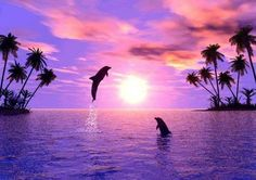 Dolphins leaping at sunset in purple ocean by palm trees Beautiful Sunset, Beautiful World, Beautiful Friend, Beautiful Creatures, Animals Beautiful, Ocean Life, Sea Creatures, Under The Sea, Pretty Pictures